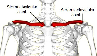 At the proximal end of the collar bone is the Sternoclavicular Joint, at the distal end is the Acromioclavicular Joint