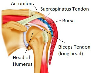 The Subacromial Space at the shoulder between the acromion and the head of humerus